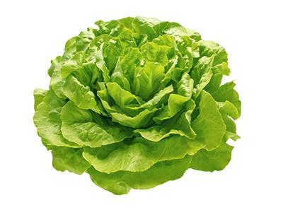 lechuga-trocadero-fruta-y-verdura-verduras-y-hortalizas